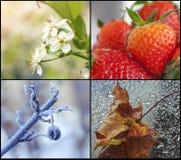 Four seasons royalty free stock image