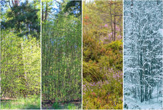 Four seasons: Spring, summer, autumn and winter. Forest landscape Stock Images