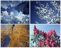 Four seasons spring, summer, autumn, winter tree stock image
