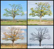 Four seasons tree Stock Photos