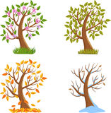 Four Seasons Tree Stock Image