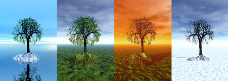 Four seasons. Tree, 3d graphic Stock Images
