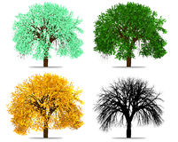 Four Seasons Tree  Abstract Rendering. 2D Illustration isolated on White Stock Images