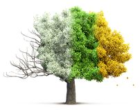 Tree isolated 3D illustration Royalty Free Stock Images