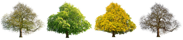 Four seasons tree set isolated Royalty Free Stock Image