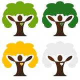 Four seasons tree. Spring, summer, autumn and winter tree Stock Photo