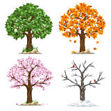 Four seasons Royalty Free Stock Images