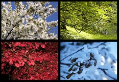 Four seasons trees. The trees view four seasons in collage Stock Images