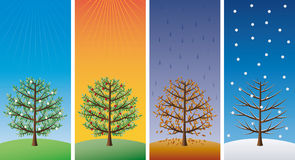 Four seasons - trees. In spring, summer, autumn and winter Royalty Free Stock Photos