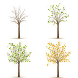 Four seasons trees vector Royalty Free Stock Image