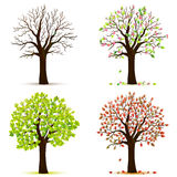 Four seasons trees vector Royalty Free Stock Photography