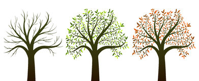 Four seasons trees on white background vector Royalty Free Stock Photos
