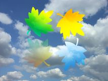 Four seasons of the year. Four colorful maple leaves representing four seasons of the year Stock Photography