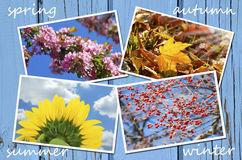 Four seasons of the year collection Stock Photos