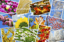 Four seasons of the year images collection Royalty Free Stock Photography