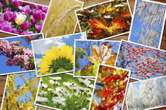 Four seasons of the year images collection Stock Images
