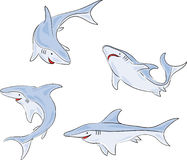 Four shark Stock Images