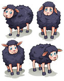 Four sheeps Royalty Free Stock Photo