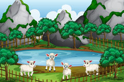 Four sheeps by the pond. Illustration Royalty Free Stock Images