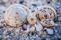 Four Shells Royalty Free Stock Photography