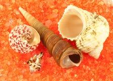 Four shells over orange sea salt Royalty Free Stock Photos