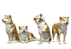Four Shiba Inu dogs in various poses vector illustration