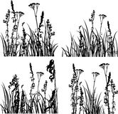 Four silhouettes  of flowers and grass Stock Images