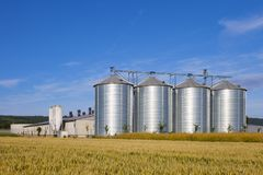 Four silver silos in corn field royalty free stock photography