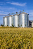 Four silver silos in corn field Royalty Free Stock Image