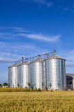 Four silver silos in corn field Stock Image