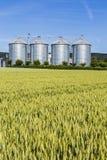 Four silver silos in field under bright sky Stock Photo