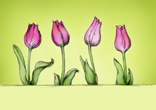 Four simple tulips in pink Royalty Free Stock Images