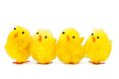 Four singing chicks Royalty Free Stock Photo