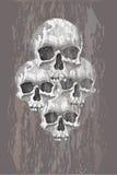 Four skulls Stock Image