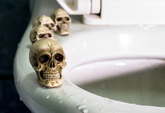 Four skulls on rim swimming pool(toilet). Royalty Free Stock Images