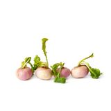 Four small baby turnips in a row isolated on white Royalty Free Stock Photography