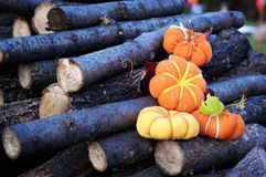 Four small pumpkin Royalty Free Stock Image