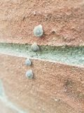 Four Small Snails in a Line royalty free stock images
