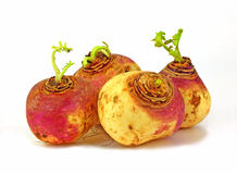 Four Small Turnips Royalty Free Stock Photo