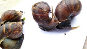 The four snails are crawling stock images