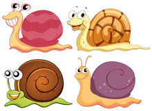 Four snails with different shells Royalty Free Stock Photography