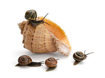 Four snails and sea cockleshell Royalty Free Stock Images
