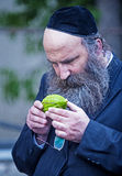 The Four species market. JERUSALEM - SEP 28 : An ultra-orthodox Jewish man inspects an Etrog in the Four spesies market in Jerusalem Israel on September 28 2012 Stock Photography