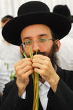 Four Species Market for Jewish Holiday of Sukkot Royalty Free Stock Photo