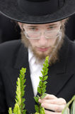 Four Species Market for Jewish Holiday of Sukkot Stock Photography