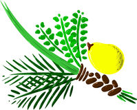 Four Species for Rosh Hashana Version 2. Vector illustration of the four species for Sukkot Jewish holiday Stock Images