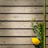 Four species, symbols of Jewish holiday Sukkot Stock Photos