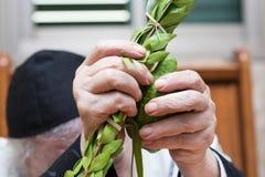Sukkot. Hands of an elderly man holding lulav and etrog Stock Photo