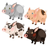 Four spotted cartoon pigs different colors Stock Photos