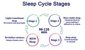 Sleep Cycle Stages. Four Stages of Sleep Cycle Royalty Free Stock Photos